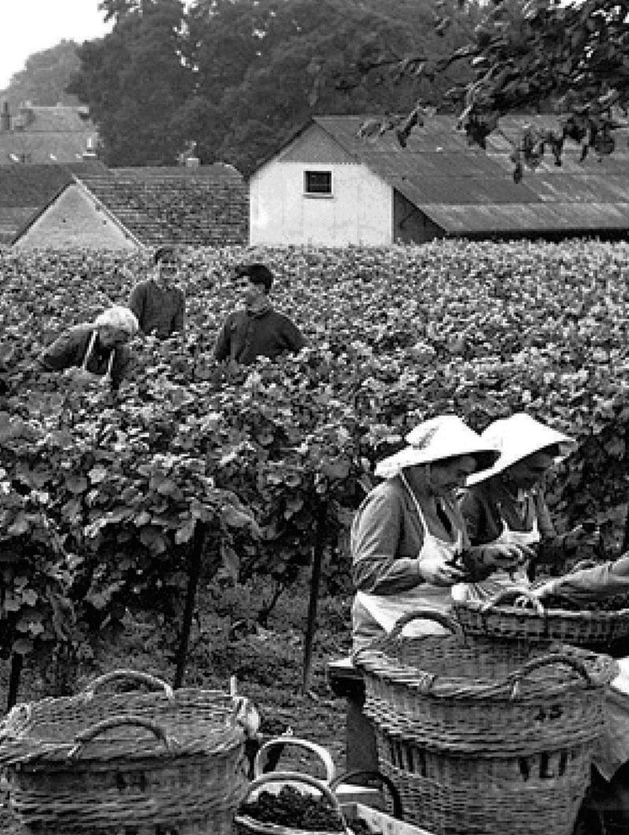 Vinistoires – home – over geschiedenis
